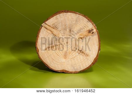 One pine saw cut with bark is standing on rib on green background. On surface of saw cut are clearly visible knots and annual rings.
