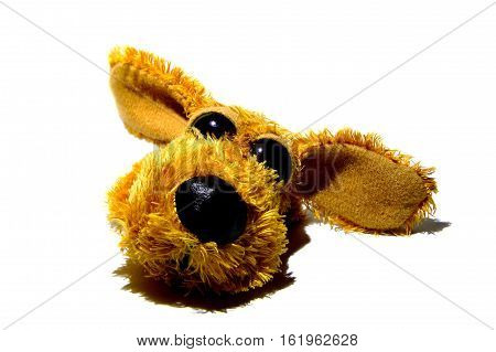 A small dog with a big kind eyes, close-up on a white background.