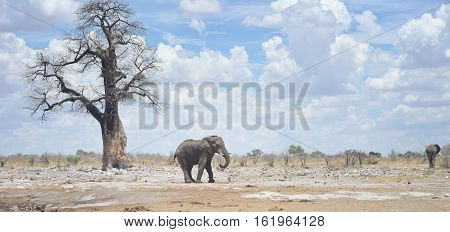 an image of two elephants in Africa