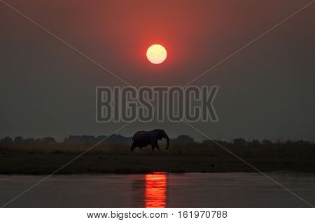 Silhouette of an elephant at sunset in the Chobe National Park in Botswana; Concept for travel safari and travel in Africa