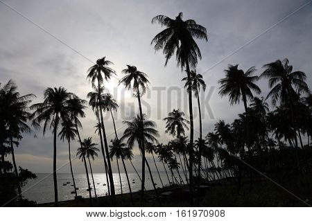 Dark silhouettes of coconut palm trees and dramatic cloudy sky on sunset at tropical place Mui Ne Vietnam