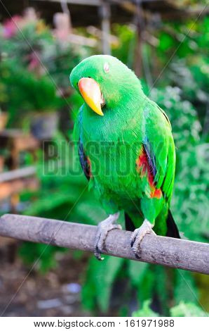 The Magic Bird,Green,Wood,Happy Time,Luck go lucky,Make The Magic Happen,Hello Worlds,Magic Worlds