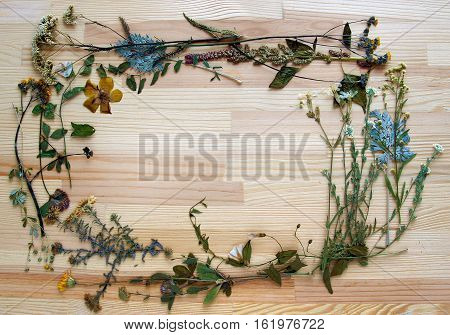 Pressed and dried plants with flowers (herbarium) form the frame on the background of wooden board