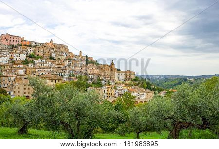 Italy Loreto Aprutino panoramic view of the country with olive trees in the foreground