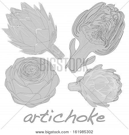 artichoke image isolated on white background .