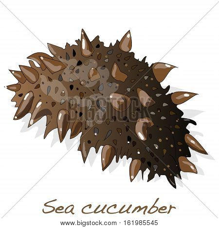 Sea cucumber is isolated on white background