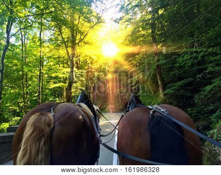 On the road to the  famous Neuschwanstein castle in Fussen Germany with 2 horses during a Sunny day.