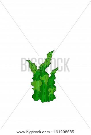 Green aquifolium algae on a white background.