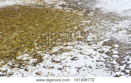 Nature winter background with yellow leaves and snow on the ground