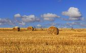 Rural landscape.Alta Murgia Nationa Park:straw bales in harvested corn fields. - (Apulia) ITALY.Summer countryside dominated by cloudscape. poster