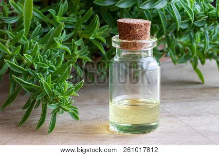 A Bottle Of Mountain Savory Essential Oil With Fresh Satureja Montana Twigs