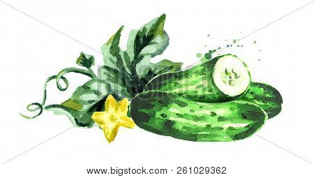 Cucumber Composition. Watercolor Hand Drawn Illustration Isolated On White Background