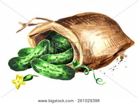 Sack With Cucumbers. Watercolor Hand Drawn Illustration Isolated On White Background