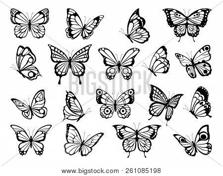 Silhouettes Of Butterflies. Black Pictures Of Funny Butterflies. Insect Butterfly Black Silhouette,