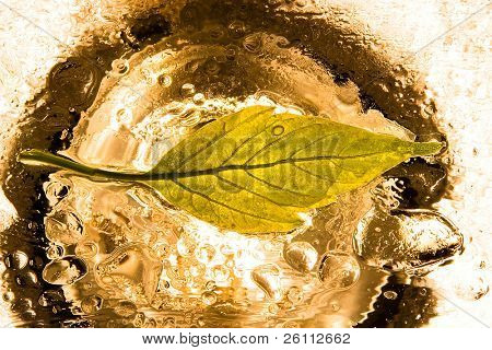 leaf in rain drops over yellow background