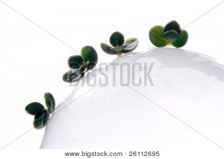 small four green plants on white sphere