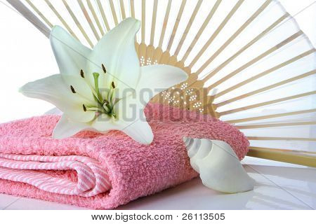 madonna lily fun and sea shell on white