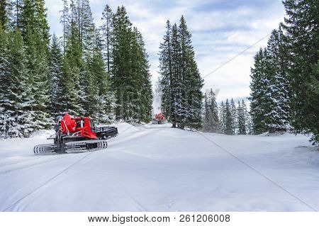 Winter Scenery With Two Red Snow Groomer Vehicles Going Through Snowy Road And Green Fir Forest, In