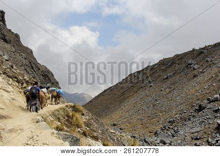 Machu Pichuu Pueblo, Peru - September 13, 2018: An Unidentified Man And A Donkey Caravan In The Ande