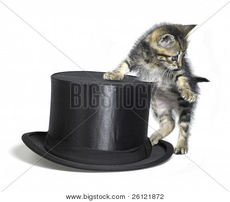 poster of Studio photography of a kitten standing upright beside a black top hat isolated on white