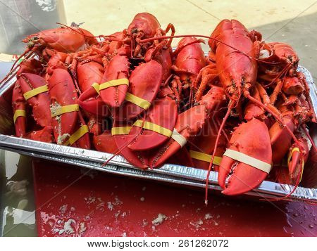 Cooked lobster ready for serving