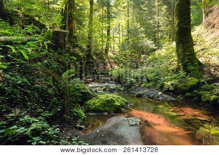 Red Creek In Rainforest. Stream In Rainforest Nature. Rainforest Stream. Nature. Stream. Natural Env