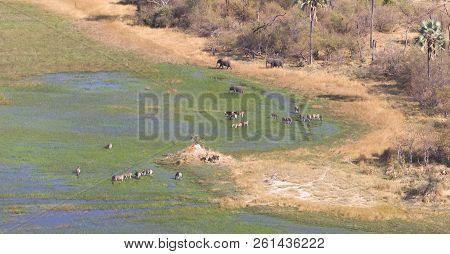 Elephants And Zebras In The Okavango Delta (botswana)