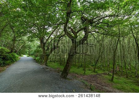 Forest In The Glendalough Valley In Wicklow Park