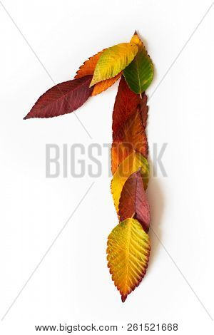 Number 1 of colorful autumn leaves. Cardinal number one mades of fall foliage. Autumnal design font concept. Seasonal decorative beautiful type mades from multi-colored leaves.