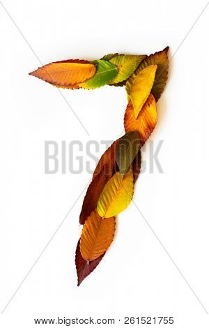 Number 7 of colorful autumn leaves. Cardinal number seven mades of fall foliage. Autumnal design font concept. Seasonal decorative beautiful type mades from multi-colored leaves.