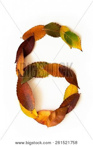 Number 6 of colorful autumn leaves. Cardinal number six mades of fall foliage. Autumnal design font concept. Seasonal decorative beautiful type mades from multi-colored leaves.