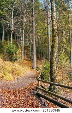 Walkway Around Lake Of Synevyr National Park In Autumn. Fallen Foliage And Wooden Fence Along The Pa