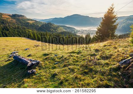 Wonderful Autumn Landscape In Mountains At Sunrise. Spruce Forest Down In Foggy Valley.  View From T