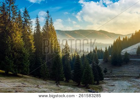 Wonderful Autumn Morning With Gorgeous Sky Above The Spruce Forest And Fog In Distant Valley. Amazin