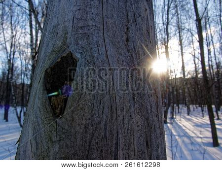 The Light Of The Sun Around The Trunk Of The Tree, Spring