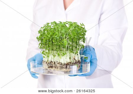 laboratory assistant holds small lab tray with plant on it, blue lab gloves and lab coat, studio shoot isolated on white background