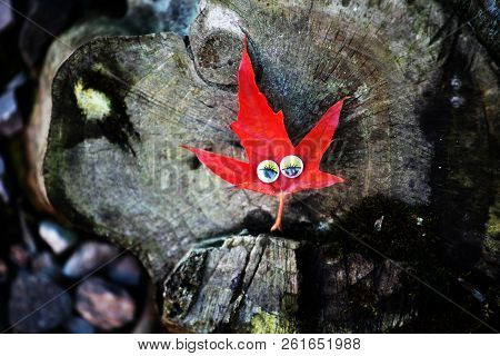 Autumn small Leaf eyes stub day light poster
