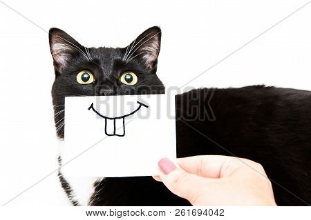 Black And White Cat On White Background. Smile Drawing On White Sticker For Cat. Hand Holding Paper.