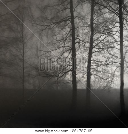 Illuminated Naked Leafless Branches, Backlit Misty Trees Silhouettes, Black Stone Wall, Vertical Bri