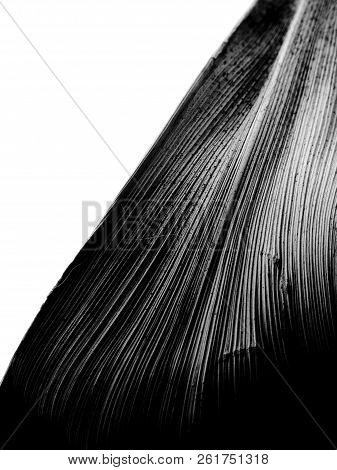 Black And White Closeup Macro Of A Vertical Leaf Kept Diagonally With Sharp Contrasting Lines Runnin