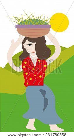 Villager Woman.  Villager Woman Carrying Green Grass Over Head.