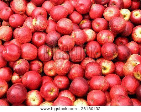 Second Grade Apples