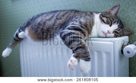 Furry Striped Pet Cat Lies On Warm Radiator Relaxing