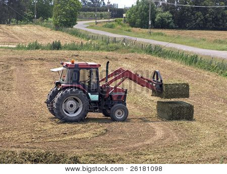 A tractor stacking large bales of pea vine hay