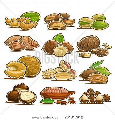 Vector Set Of Nuts, 12 Cut Out Assorted Heap Of Abstract Hazel Fruits For Healthy Nutrition, Collect