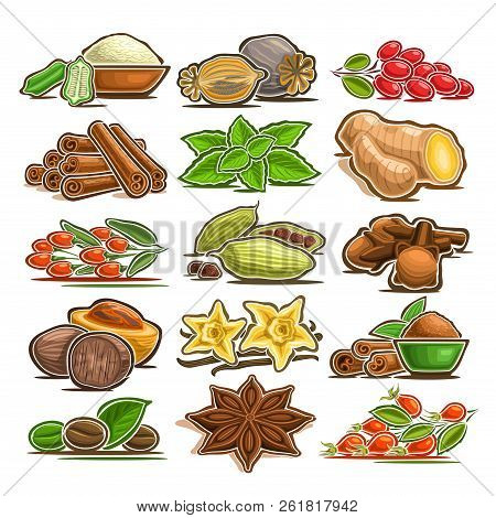 Vector Set Of Indian Spices, 15 Cut Out Assorted Abstract Condiments For Asian Cuisine, Collection O