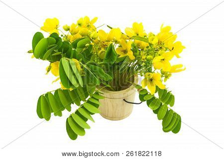 Closed up yellow flower American Cassia or Golden Wonder isolated in wooden csaks on white background.Saved with clipping path. poster