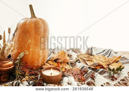Happy Thanksgiving Concept. Beautiful Pumpkin, Candle Light, Fall Leaves, Berries, Nuts, Acorns, Cot
