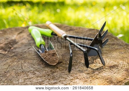 Gardening Tools. Hoe, Trowel On Wooden Stump In Sunny Day In Spring Garden Close Up. Hand Equipment