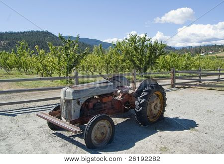 Antique tractor in front of fertile orchard land; Summerland, BC, Canada